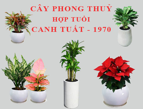 phong-thuy-tuoi-canh-tuat-1970-5
